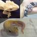爬虫類飼育者がおすすめする癒し系爬虫類3選!